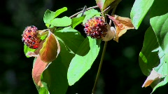 Multi-colored plant pollen and leaves move in a breeze at day. Stock Footage