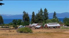Golden fields in Lake Tahoe surround a small farm near the Sierra Stock Footage