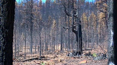 A fire burned forest with trees cut down Stock Footage