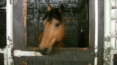 Brown horse in stall. Stock Footage