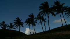 Palmuja puhaltaa tuuli kauko trooppinen ranta Arkistovideo