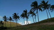 Stock Video Footage of Pan across rows of palms blowing in the wind on a South Sea island