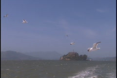Seagulls fly Stock Footage
