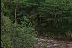 Beautiful mountain waterfall - stock footage