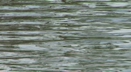 Stock Video Footage of water ripple closeup 07