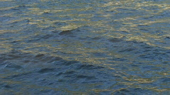 Water ripple closeup 01 Stock Footage