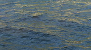 Stock Video Footage of water ripple closeup 01