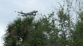 Airliner Flying Over Trees HD Footage