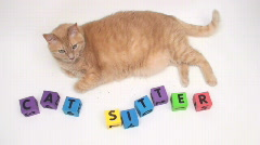 Orange tabby with cat sitter building blocks - HD  Stock Footage