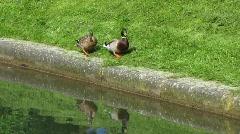 Germany Dusseldorf Royal garden, Stock Footage