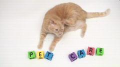Cat with pet care alphabet blocks - HD  - stock footage