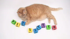 Orange cat with pet sitter building blocks - V2  Stock Footage