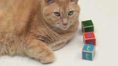 Orange tabby with building blocks spelling cat - HD  Stock Footage