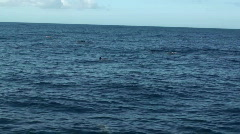 Spinner dolphins, 9 Stock Footage
