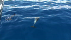 Spinner dolphins7 Stock Footage