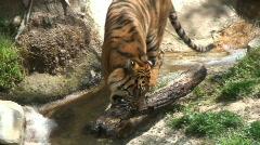 1080P Animals and Wildlife Series Stock Footage