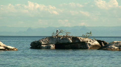 Malawi: eagle on a rock 2 Stock Footage