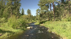 P00265 Spring Creek in the Black Hills - stock footage