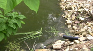 Db water pollution Stock Footage
