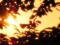 Sunset Leaves 06 Loop Footage