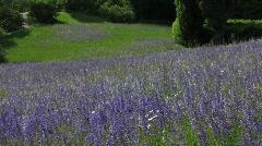 Germany Berlin Purple flower grassland meadow Stock Footage