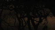 Trees tents ocean jib 5 Stock Footage