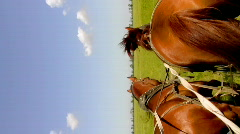 Two sorrel horses Stock Footage