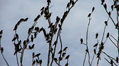 Many birds in tree 4 Stock Footage