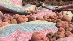 Potato Harvest, Peru Stock Footage