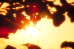 Sunset Leaves 01 Loop Stock Footage