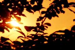 Sunset Leaves 05 Loop Stock Footage