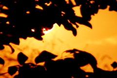 Sunset Leaves 08 Loop Stock Footage