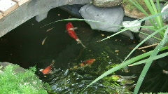 Koi Pond Stock Footage