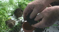 Man Plants Herbs Stock Footage