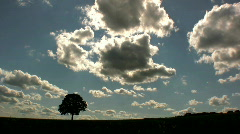 Lone tree with time lapse sky Stock Footage