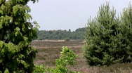 Stock Video Footage of Ginkel Heath, 1944 dropzone near Ede and Arnhem