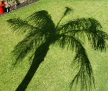 Palm Tree Shadow Time Lapse - stock footage