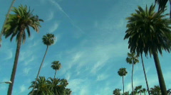 Beverly Hills palm trees - HD  Stock Footage