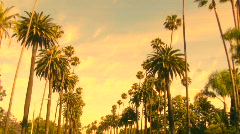 Beverly Hills palm trees at sunset - HD  Stock Footage