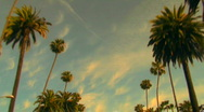 Stock Video Footage of Rodeo Drive palm trees at sunset - HD