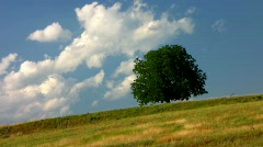 Moving clouds behind a tree on a hill Stock Footage