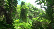 Blowing palms, rainforest Stock Footage