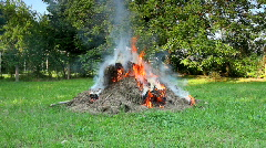 BonFire from grass and woods in the green garden Stock Footage