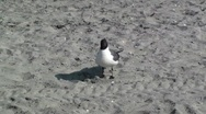 Seagull 1 Stock Footage