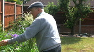 Stock Video Footage of Elderly gentleman in the garden