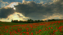 Sunset over poppies fields hdr time lapse Stock Footage