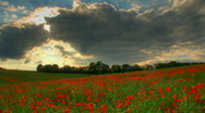 Stock Video Footage of Sunset over poppies fields hdr time lapse