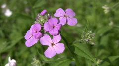 Purple wildflowers. Stock Footage