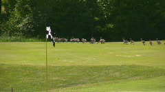 Geese On A Golf Couse Stock Footage