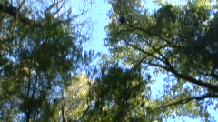 Driving - Trees overhead Stock Footage
